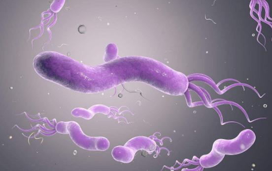 幽门螺杆菌的根除方法、根除治疗失败的原因及对策