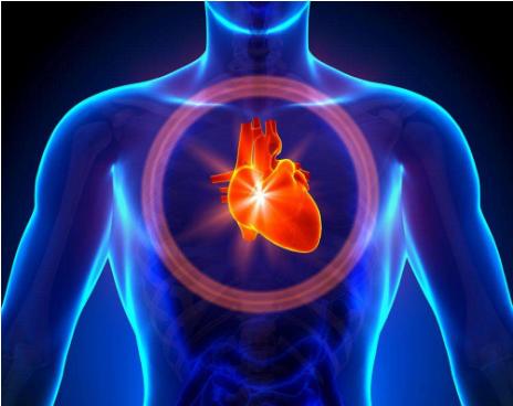 心脏的功能、心脏不好的九个表现、心脏寿命延长方法