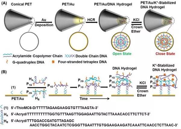 刺激响应DNA结合水凝胶用于纳米通道