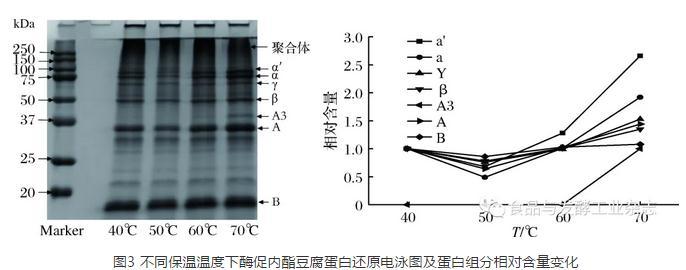 谷氨酰胺转氨酶改善内酯豆腐凝胶强度的作用机理研究