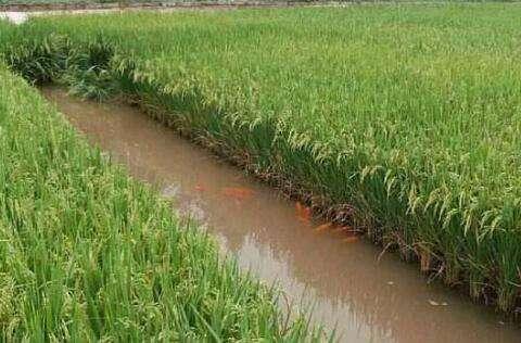 稻渔综合种养技术发展现状、方向