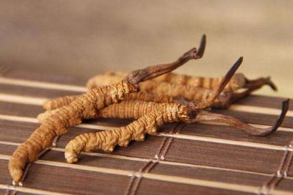 食药监停止冬虫夏草用于保健食品的试点工作