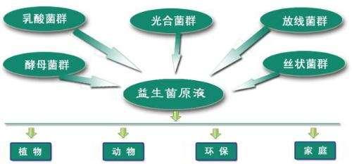 我国益生菌产业发展现状、难点、建议