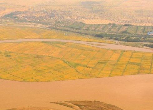 中东沙漠出现稻田!外媒关注中国种植海水稻获突破
