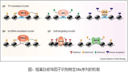 表观遗传修饰的靶向调控机制研究进展