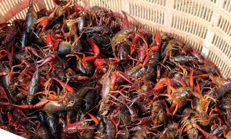 《中国小龙虾产业发展报告(2018)》解读