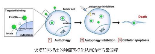 以C3N量子点为基础开发出新型肿瘤可视化靶向治疗方案