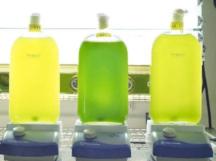 生物燃料:针对碳6位的高效降解方式提高木质纤维素的利用效率