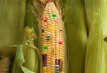 欧州花一亿元研究转基因食品存在潜在风险