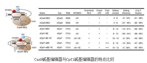 一系列基于CRISPR/Cpf1(Cas12a)的新型碱基编辑器(dCpf1-BE)
