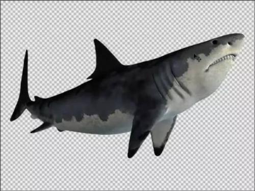 如何减少阻力来达到节能降耗的目的?——以鲨鱼为仿生原型的研究