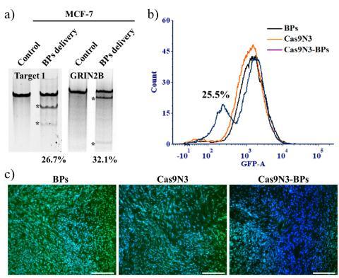 用于基因编辑的黑磷增强型CRISPR/Cas9运载与释放系统
