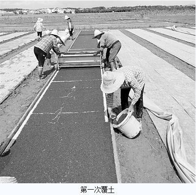 水肥一体化的固定秧床:无盘育秧技术与印刷定位播种技术相结合