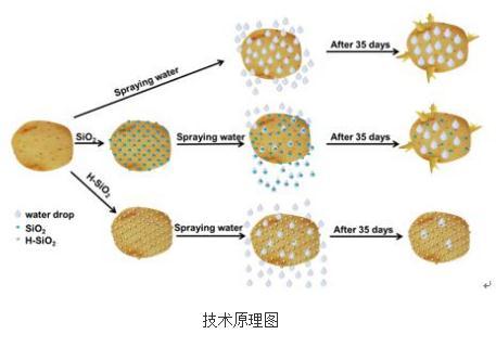 疏水纳米二氧化硅可抑制马铃薯发芽