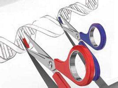 基于CRISPR-Cas9疗法对编辑后细胞造成的序列变化