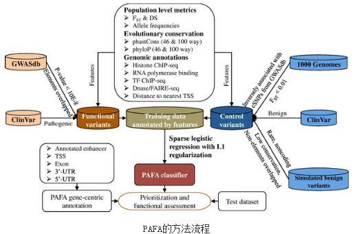 PAFA方法评估编码区还是非编码区的变异
