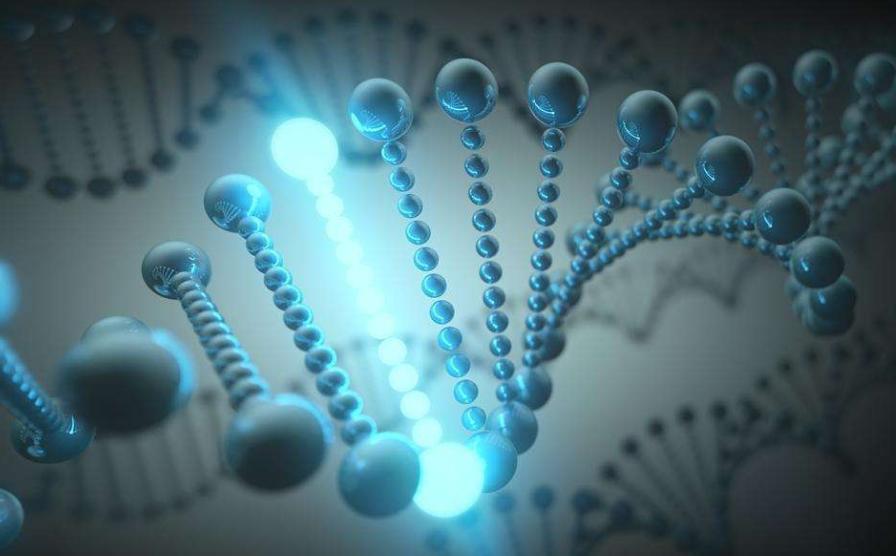 """""""基因魔剪""""准确性低于预期 可能引起DNA大规模删除或重排"""