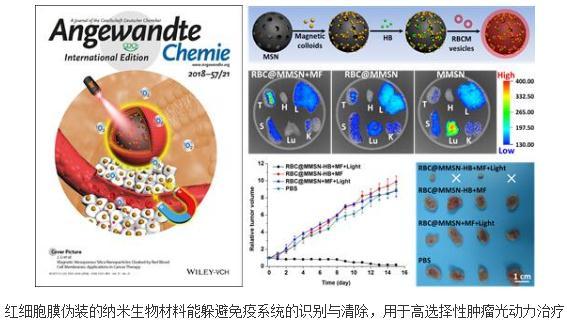 红细胞膜伪装的纳米生物材料可用于高选择性肿瘤光动力治疗