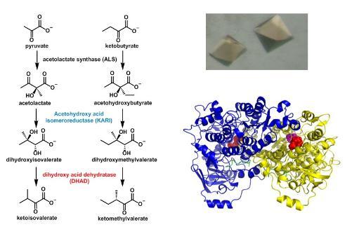 揭示新型天然产物除草剂aspterric acid产生效能的分子机制