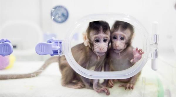 G60脑智科创基地成立:发展以克隆猴为代表的关键核心技术