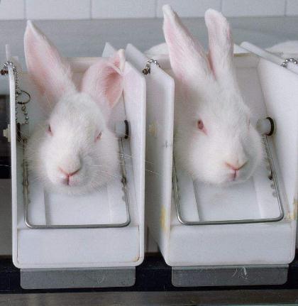 基因治疗:吉林大学培育出具有白化病、早衰症等遗传性疾病模型兔