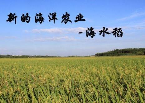 海水稻引误解,盐碱地种稻还须靠淡水灌溉洗盐