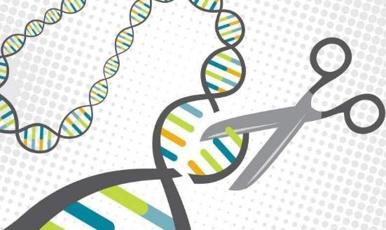 美国人谨慎支持基因编辑技术用于提升婴儿智力