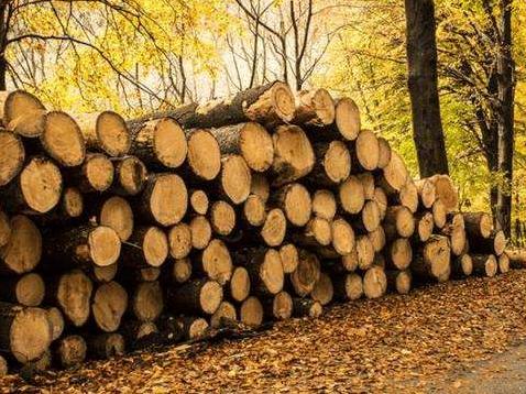 """中国""""爆买""""日本木材是双赢 中国环保日趋严厉"""