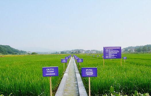 VIP+N修复技术模式:在重金属超标农田里安全生产大米