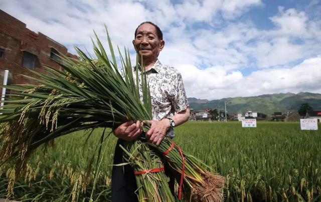 良田都抛荒,盐碱地种稻有商业化推广价值吗?
