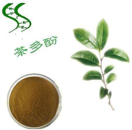 茶多酚:世界首个促进糖尿病伤口愈合的天然单体活性成分