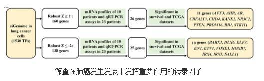 肺癌发生发展中发挥重要作用的转录因子