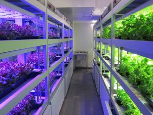 效益是植株间LED补光技术最好的通行证