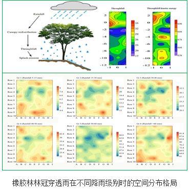 橡胶林林冠穿透雨在不同降雨级别时的空间分布格局