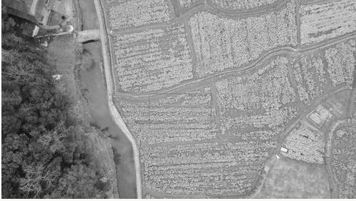 全球农情遥感速报系统:我国大宗农作物进出口量预测的基础信息源