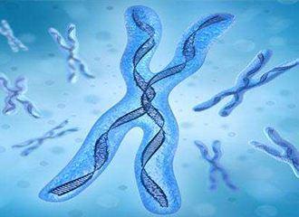 酵母染色体融合:人工合成生命需法规约束