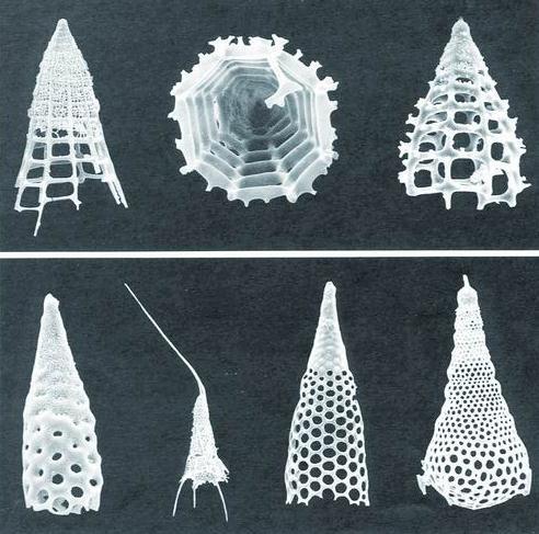 罗辉:放射虫化石标本的研究现状