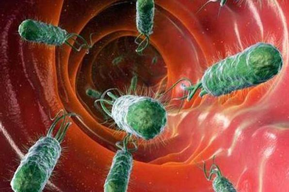 美学者研究发现胃病病毒能以集群的方式传播