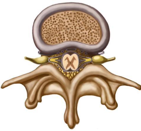 多细胞神经组织工程方法:利用3D打印设备制出生物工程脊髓