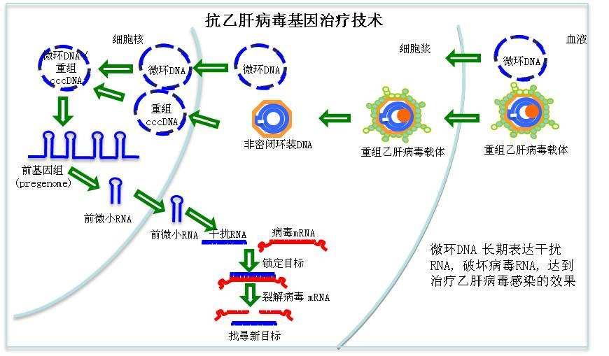 GE医疗细胞与基因治疗亚洲技术中心:BSL2标准实验室赋能精准医疗