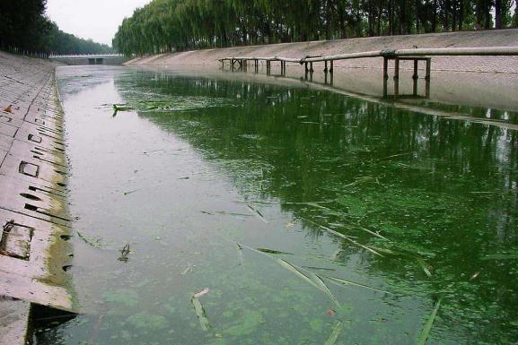 城市黑臭水体该如何处理?
