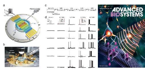 新型的超声神经调控芯片建立兼容离体脑片膜片钳记录的实验系统