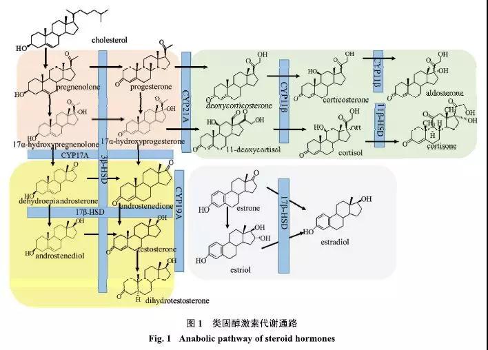 血液中类固醇激素的分析方法优缺点对比