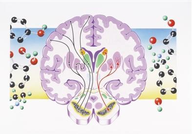 """多巴胺荧光探针绘制脑图谱的""""指路明灯"""""""