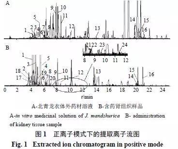 基于UPLC-Q-TOF/MS技术的北青龙衣大鼠肾组织化学成分分析