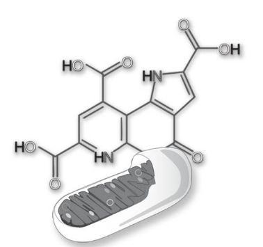 Bio PQQ获无违禁药物认证,将作为新膳食成分