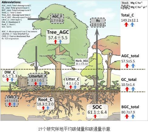 增加树木多样性能显著提高森林生态系统碳储量