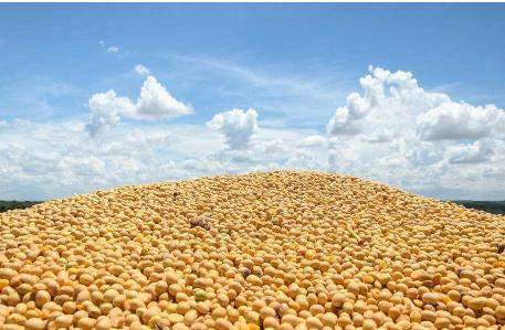 我国大豆进口来源呈现多元化趋势,南美超过美国