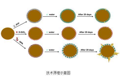 吴正岩课题组研制出马铃薯种薯纳米促芽剂