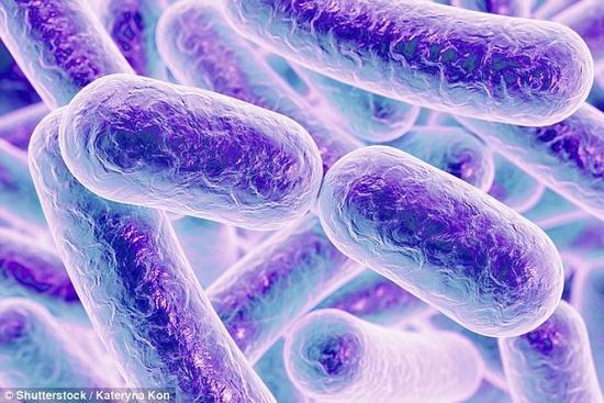 """加拿大""""铁幕洞(Iron Curtain Cave)""""神秘远古细菌能够杀死超级细菌"""